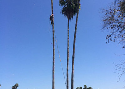 Routine Tree Care